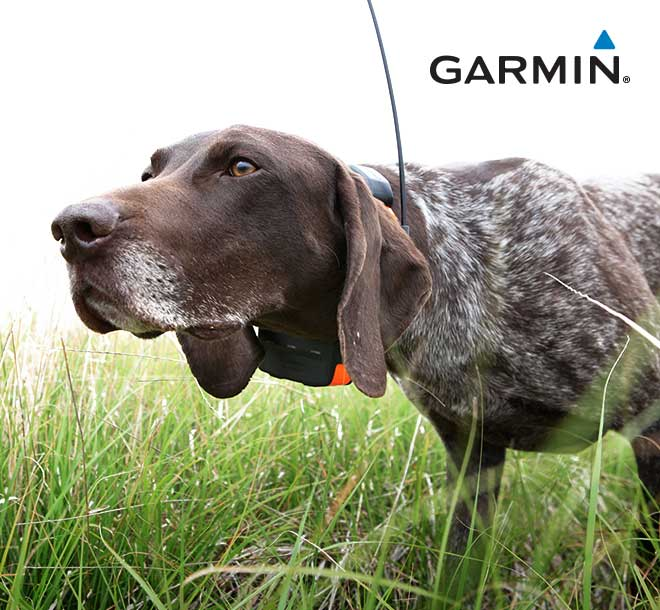 Garmin Dog Collars