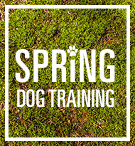 Spring Dog Training