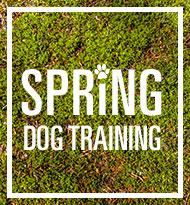 Spring Dog Training
